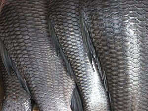 300px-fish_scales